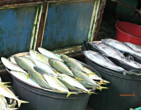 Mercati dal mondo: il Mercato del pesce di Pattaya
