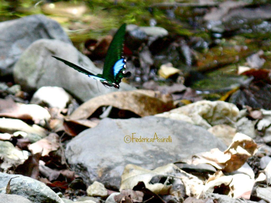 Farfalle al Ram Kham Haeng National Park