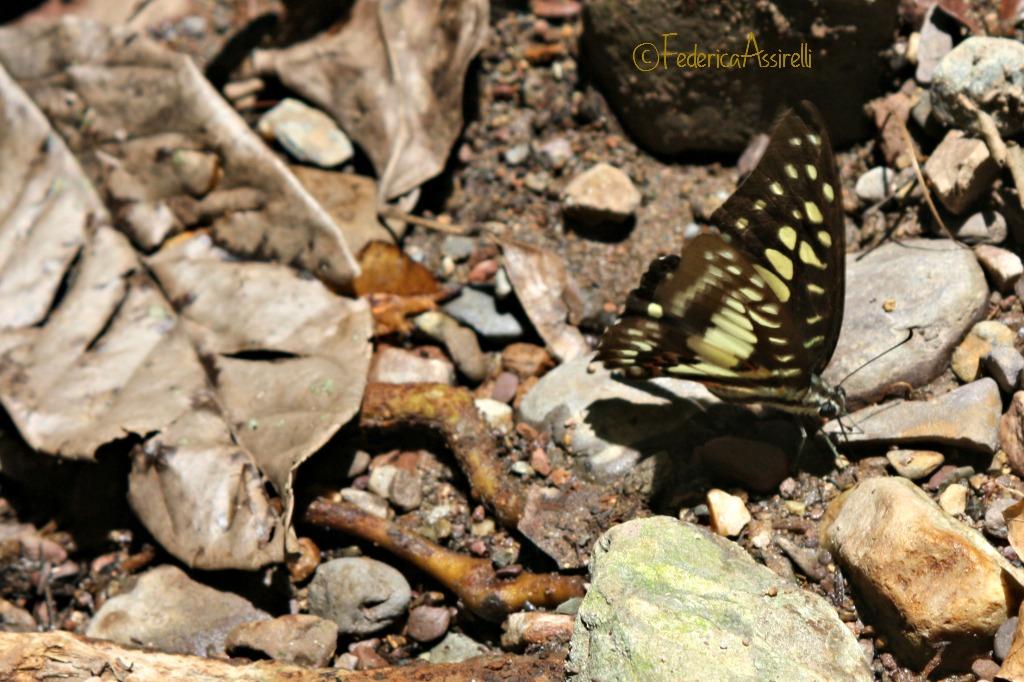 Foglie e farfalle