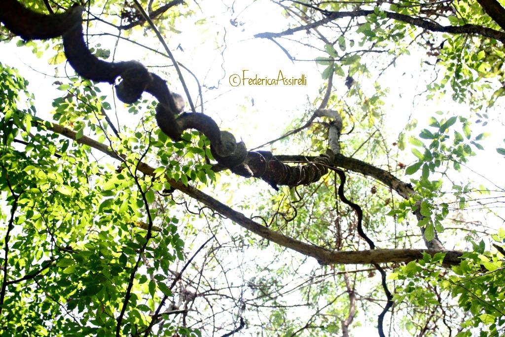 Liane e cielo nella giungla