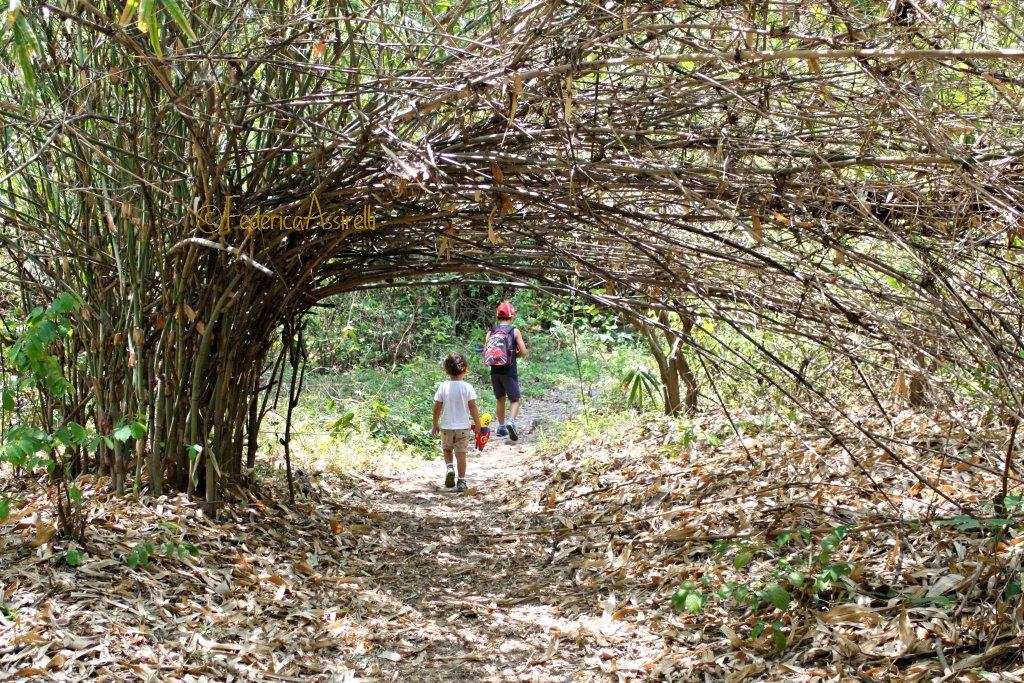 Passaggio sotto al bambù