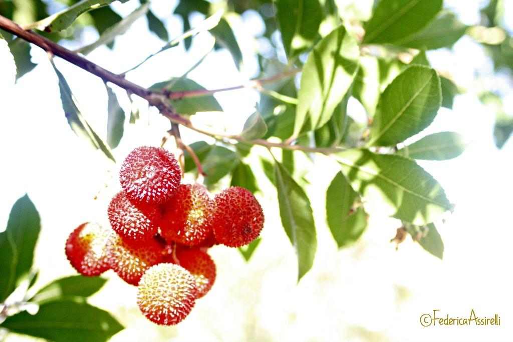 Frutti del corbezzolo