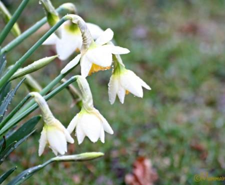 Nuovo blog in attesa della primavera!