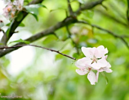 Il mio giardino di aprile