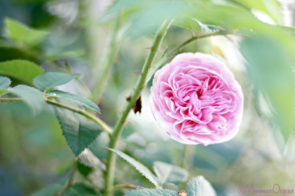 Felicité Parmentier, giardino di giugno