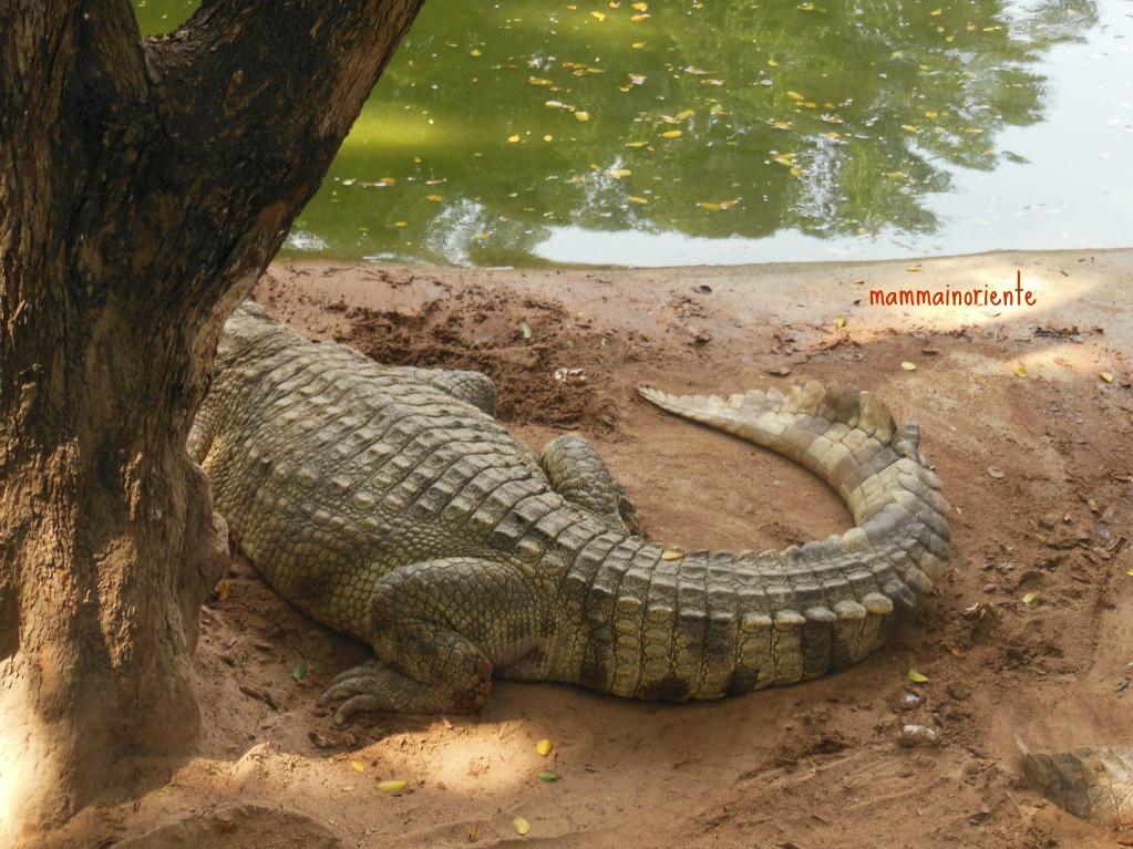 La Fattoria dei coccodrilli