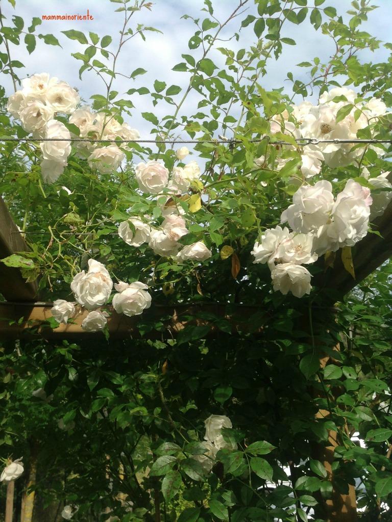 Il mio giardino in Italia